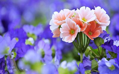 Beau Bouquet de Fleurs - Fond d'écran en Ultra HD 4K 2160p