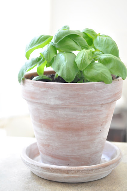 Olive Amp Gray Diy White Washed Terracotta Pot