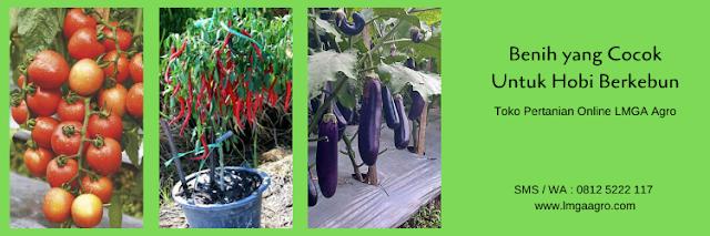 berkebun, benih tanaman, budidaya tanaman, benih sayuran, lmga agro
