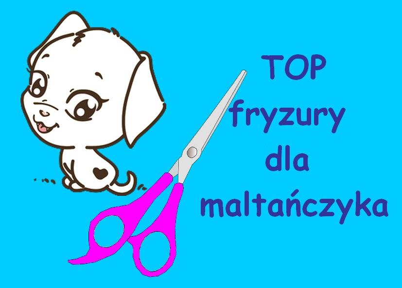Biały Maltan Top Fryzury Dla Maltańczyka