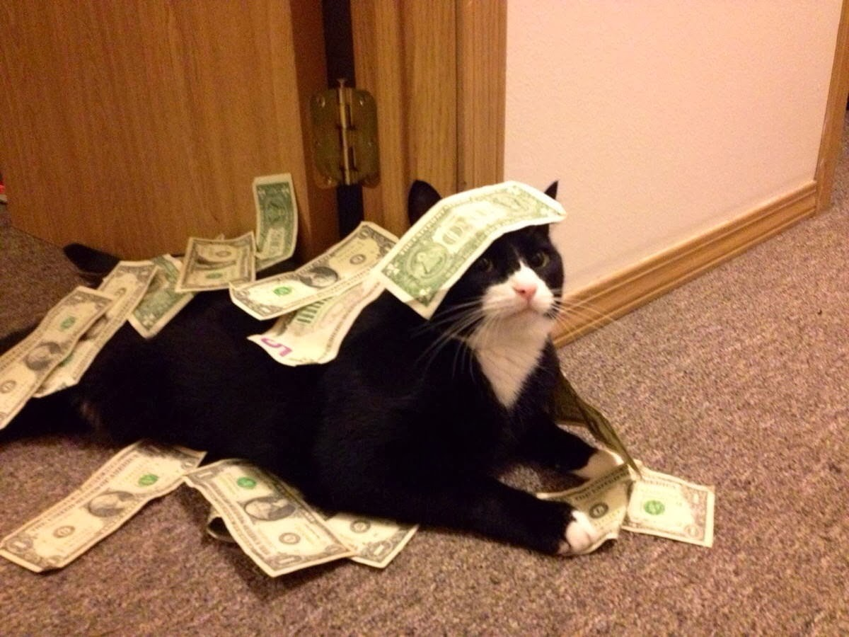 Funny cats - part 90 (40 pics + 10 gifs), rich cat showers himself with money