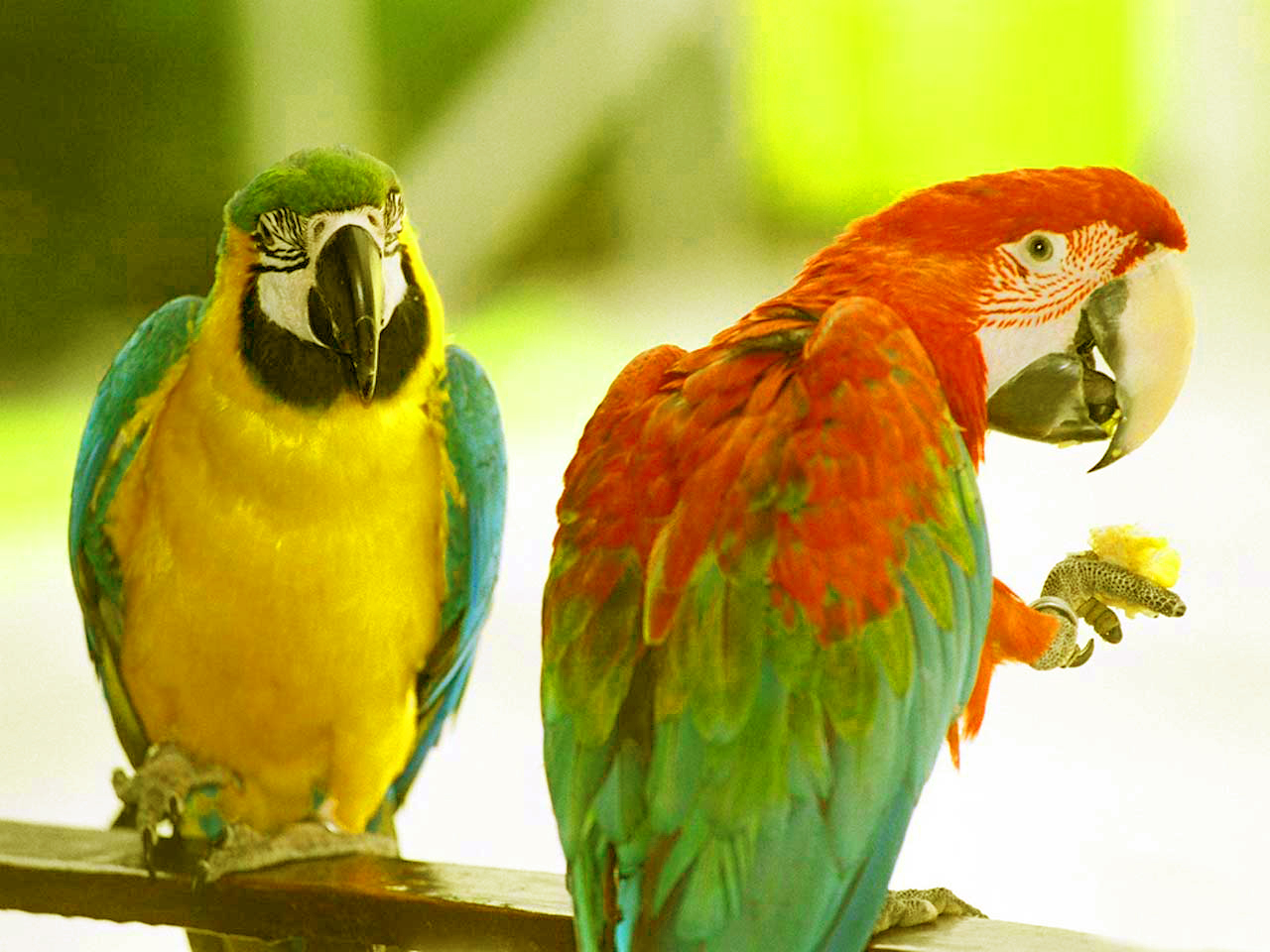 47 most dashing and beautiful parrot wallpapers in hd top 47 most dashing and beautiful parrot wallpapers in hd voltagebd Images