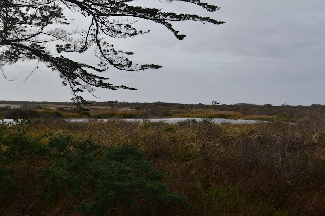 dune grass and swamp