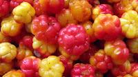 fruit around the world, strange fruit, strange fruit around the world, crazy fruit, crazy fruit around the world, CLOUD BERRY