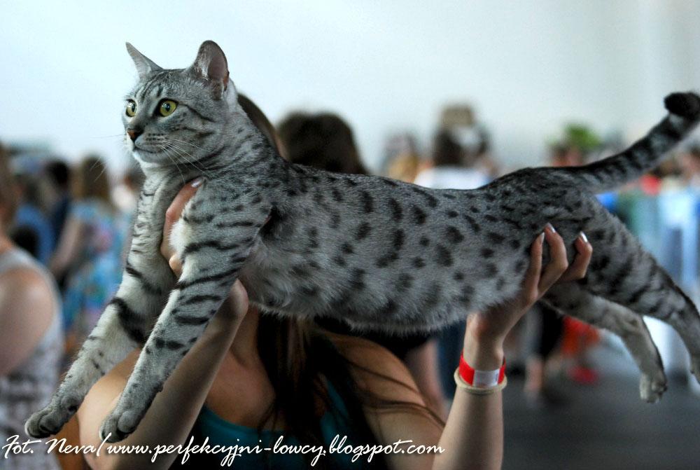 Po Zapadnięciu Zmroku Wszystkie Koty Stają Się Lampartami