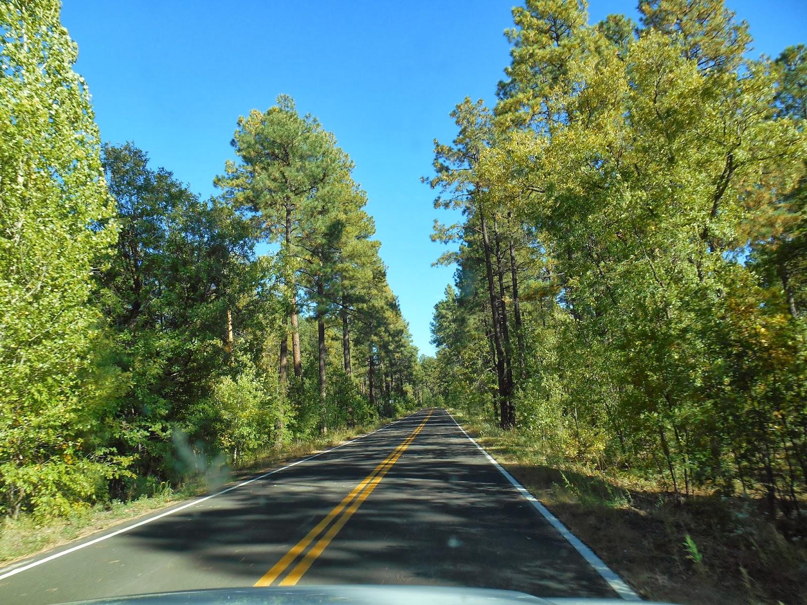 Elder Samuel Clark's Mission Blog: Not in Scottsdale Anymore