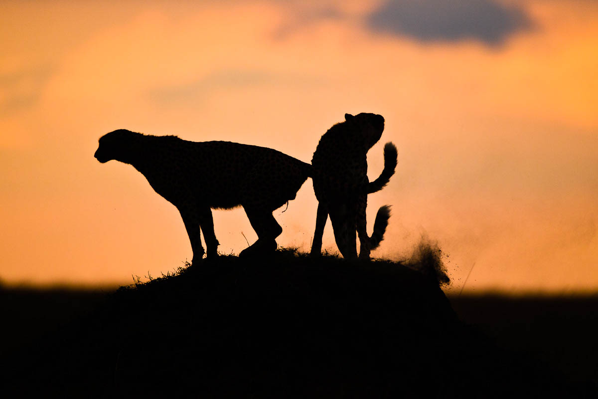 the dangers of owning wild animals Backpacking skills  safety and survival  wild animal dangers  animals in the wild can be unpredictable additionally wild animals can be carriers of rabies .