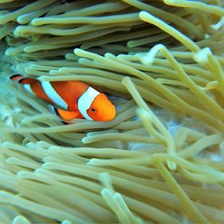 Mangrove Point Snorkeling Nusa Lembongan Bali