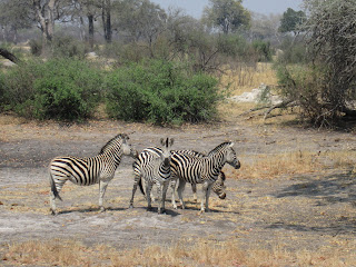 Hwange full day safari tours
