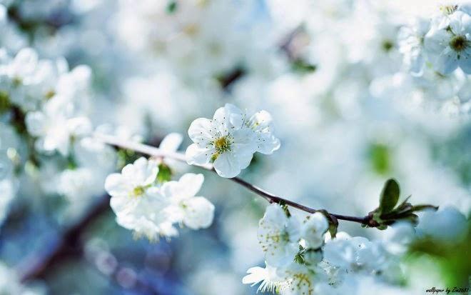 Hình ảnh các loài hoa đẹp nhất thế giới