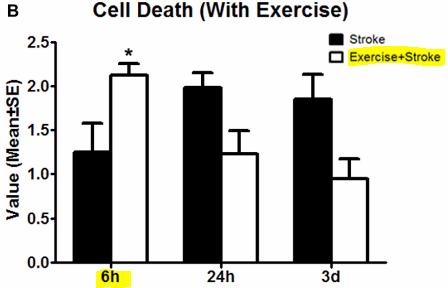 図:超早期リハビリと細胞死