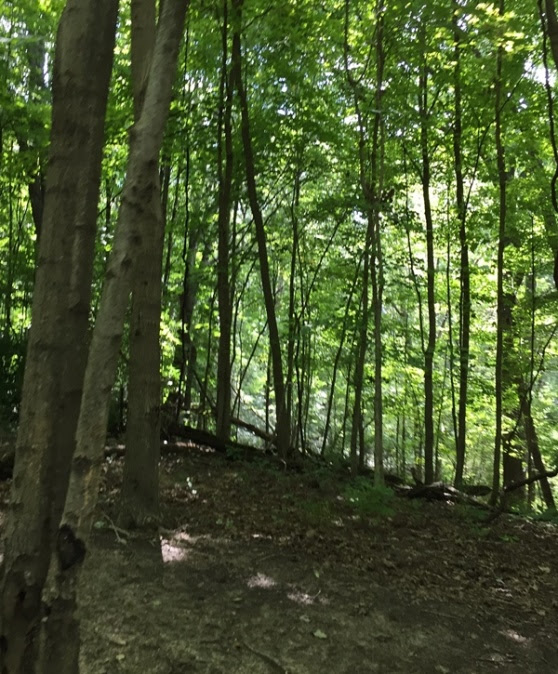 4 wheeling trails