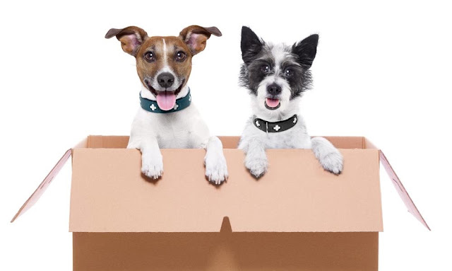 Guidelines to Move Pets and Plants with Packers and Movers
