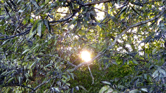 My WAHM Plan: September Sunlight through the trees #WW