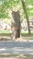 arbres coupé
