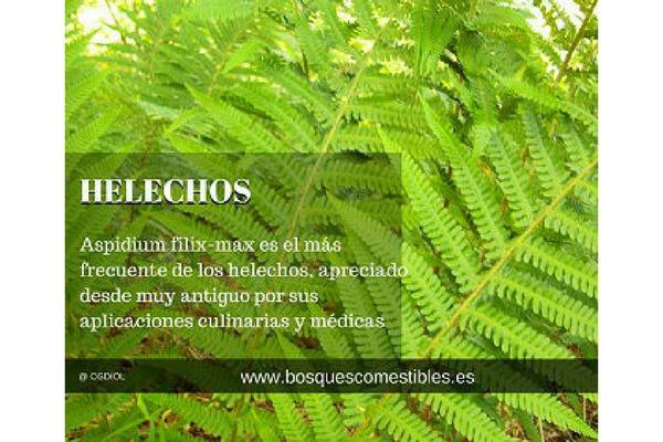 Helechos en los bosques comestibles - Cuidados de los helechos ...