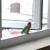 Giấc Mơ Thấy Chim Bay Vào Nhà Là Điềm Báo Gì