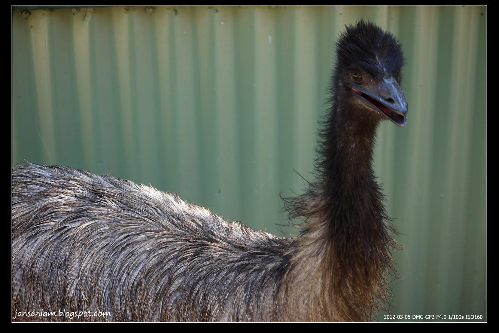 贊臣博一博: Featherdale Wildlife Park