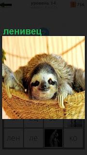 В гамаке расположился ленивец и улыбается, держась своими лапками