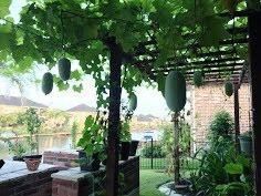 Vườn nhà QN