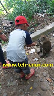 Pengunjung memberi makanan kepada kera plangon