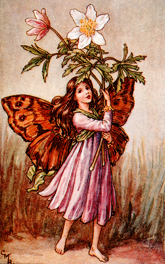 It S Okei Flower Fairies Of Spring Cicely Mary Barker