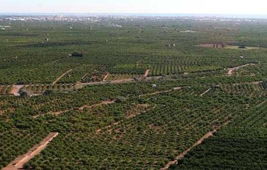 El Consell anticipa 44,6 millones de euros de los pagos directos de la Política Agrícola Común