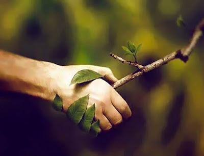 La naturaleza saluda