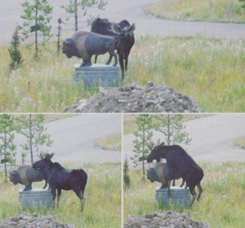 Fails de animales