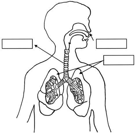 Maestra de Primaria Aparato respiratorio y circulatorio 1 de