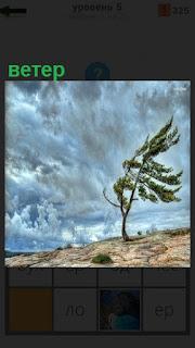 Сильный ветер гоняет тучи и заставил наклониться дерево
