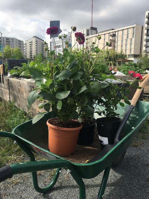 Mobile Garden City