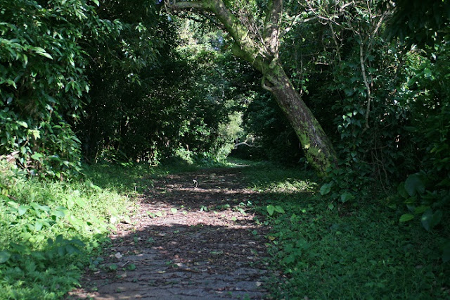 保栄茂グスク入口へ続く小道の写真