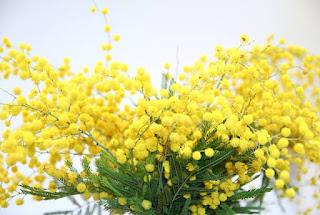 Gambar Bunga Akasia yang Indah 15