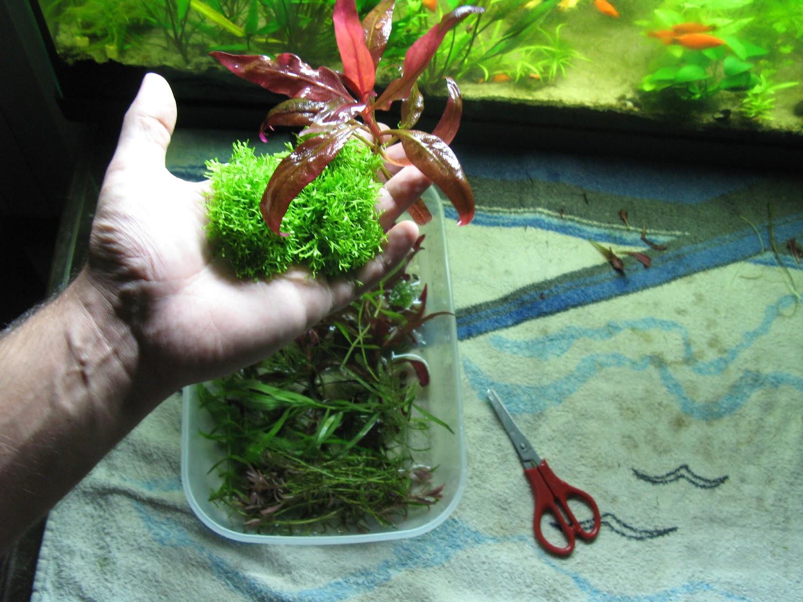 plexiglass per acquario fai da te: bostik prodotti professionali ... - Plexiglass Per Acquario Fai Da Te
