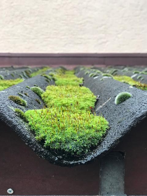 frisches grünes Moos auf dem Dach