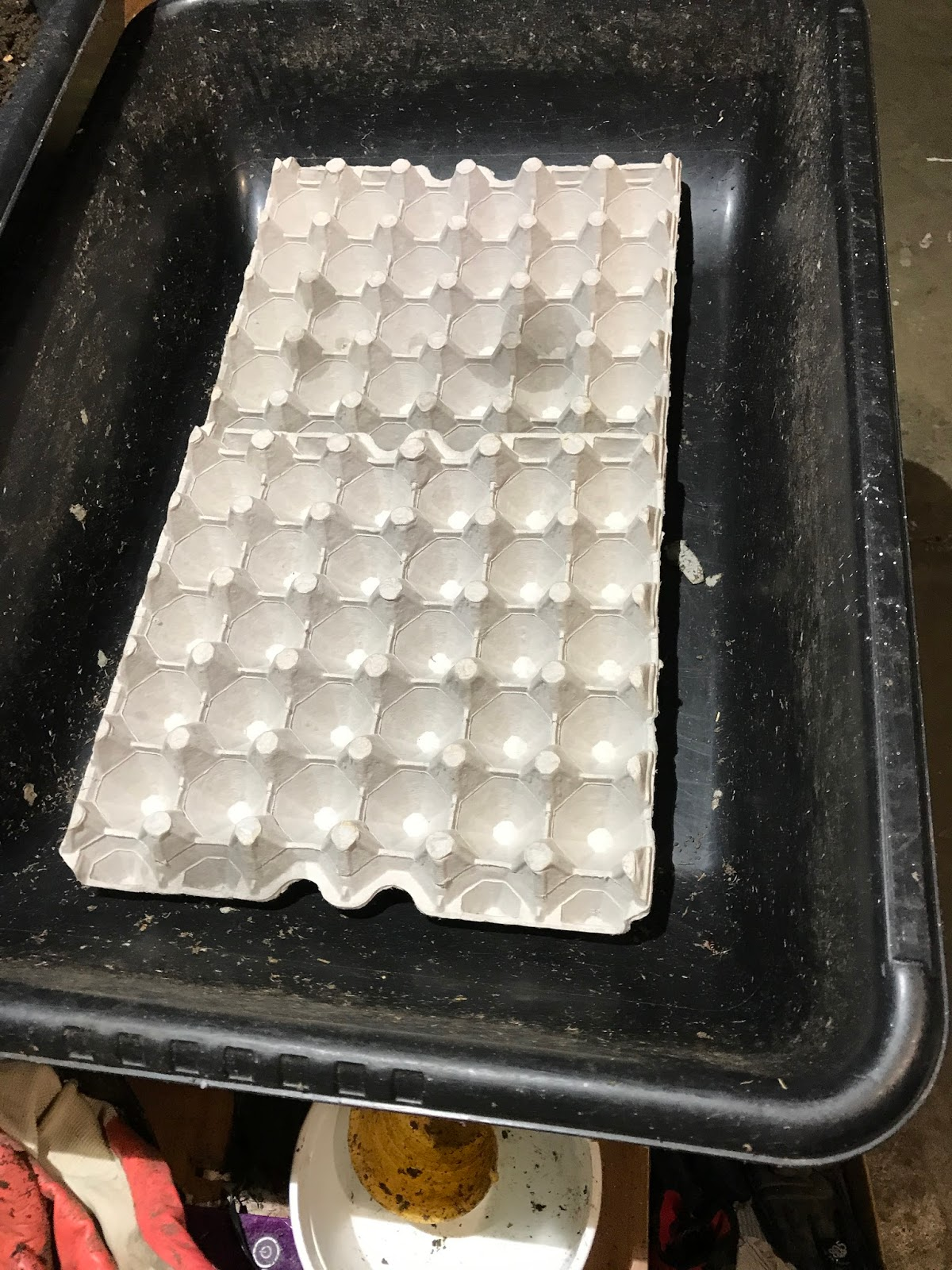 Worm Fancy Sacramento area s worms and worm castings