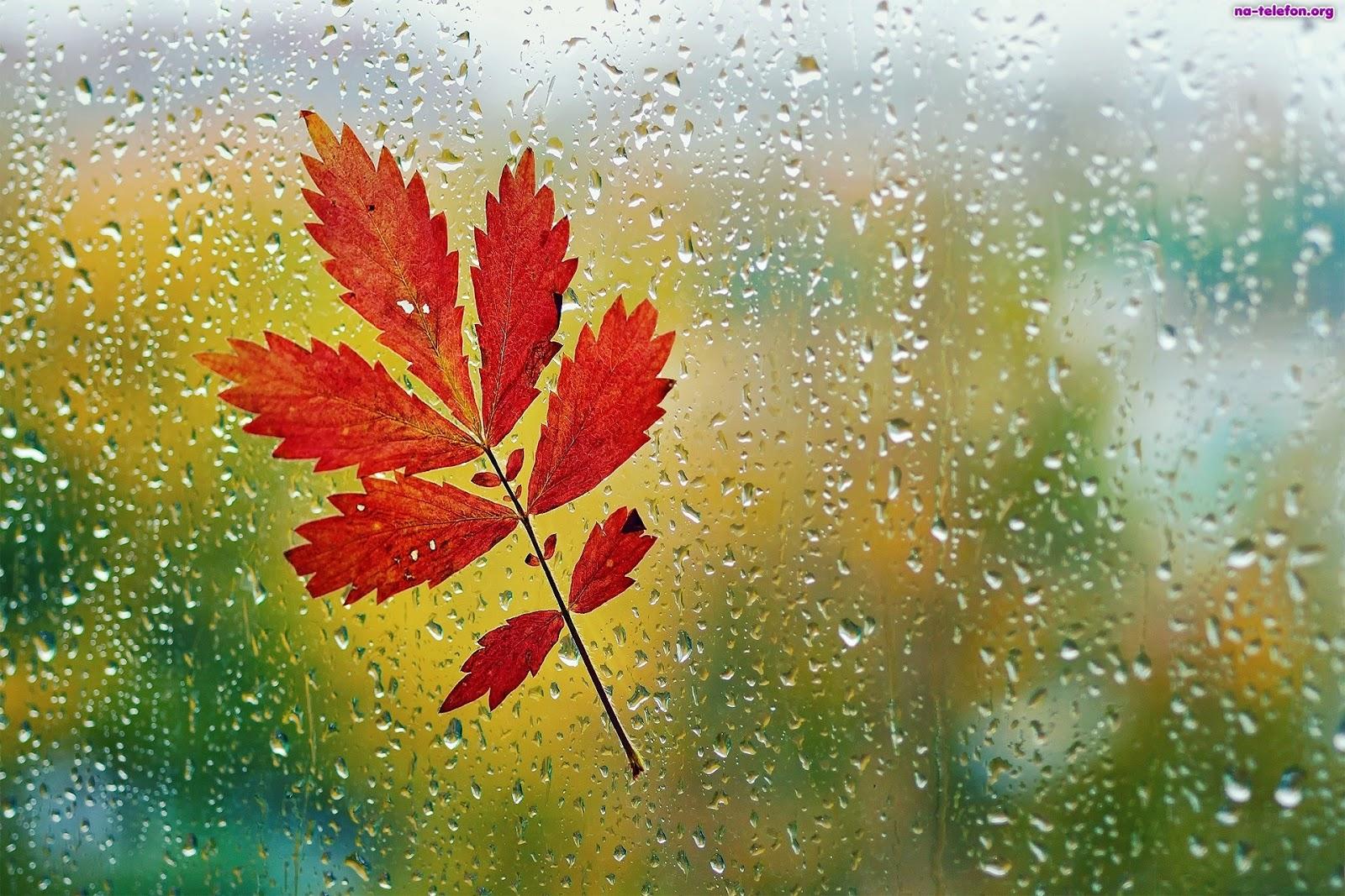 Www Wiersze Wycieczki Wspomnienia Wiersz O Deszczu Dla