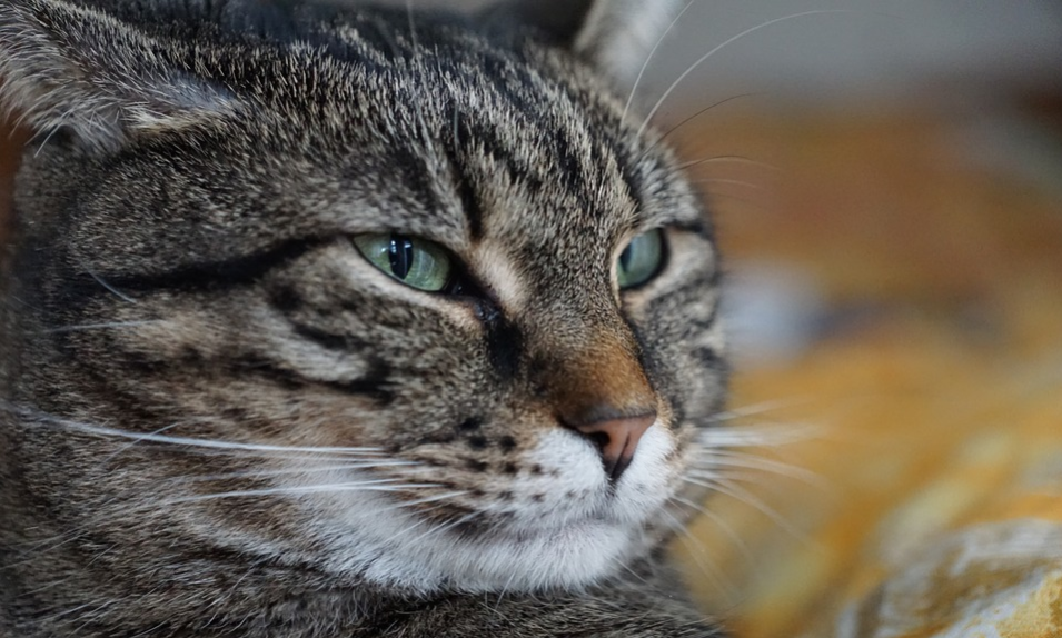 Download 96+  Gambar Kucing Sakit Paling Keren HD