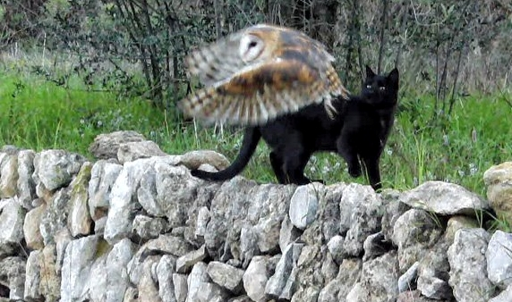 White Wolf : Cat And Owl Are Real-Life Best Friends In The ...