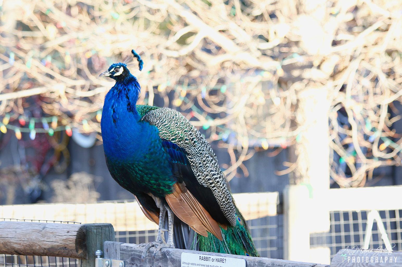 The Pueblo Zoo in Pueblo, Colorado