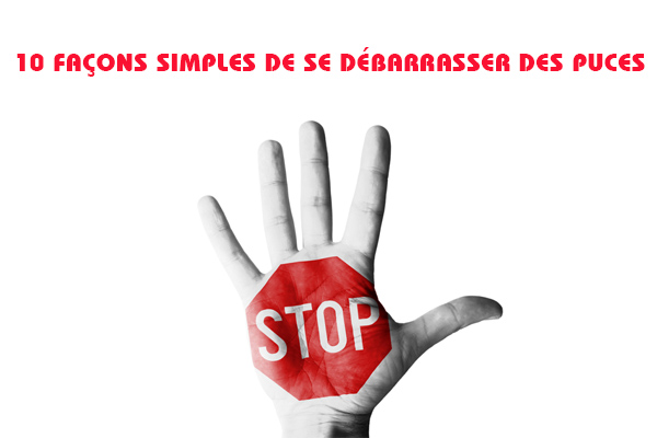 Comment se d barrasser des puces 10 simples fa ons piq re de puce guide - Comment se debarrasser des limaces ...