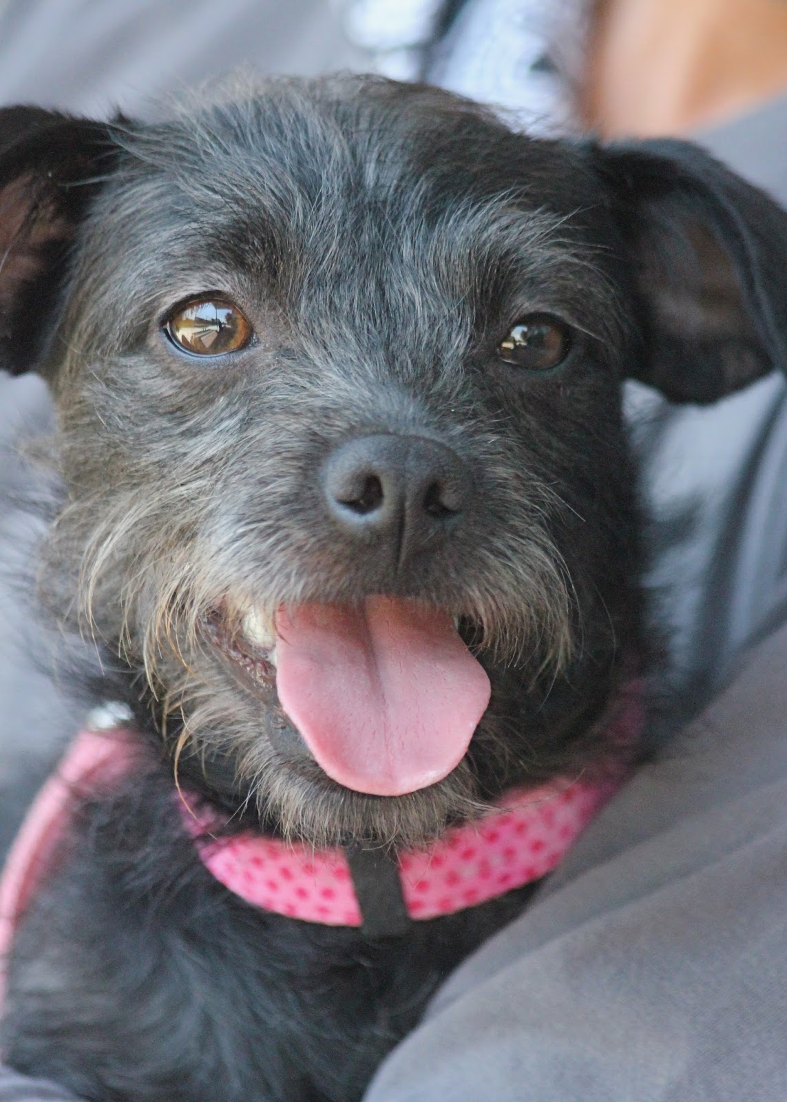 Humane Society Silicon Valley Blog: Very Special Happy Dog ...