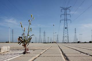 Fotografía de una planta creciendo entre las baldosas del suelo ante un campo de torres eléctricas