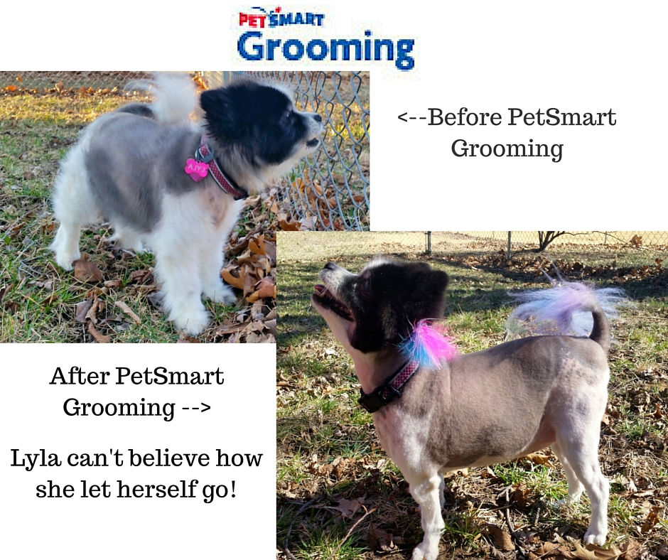 Before and After PetSmart Grooming