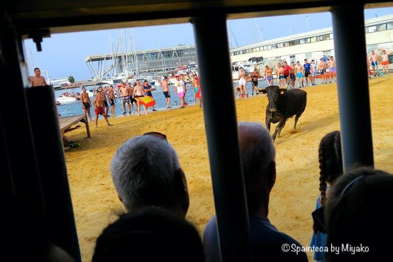 スペインの海の牛追い祭りで勢いよく走る黒い牛