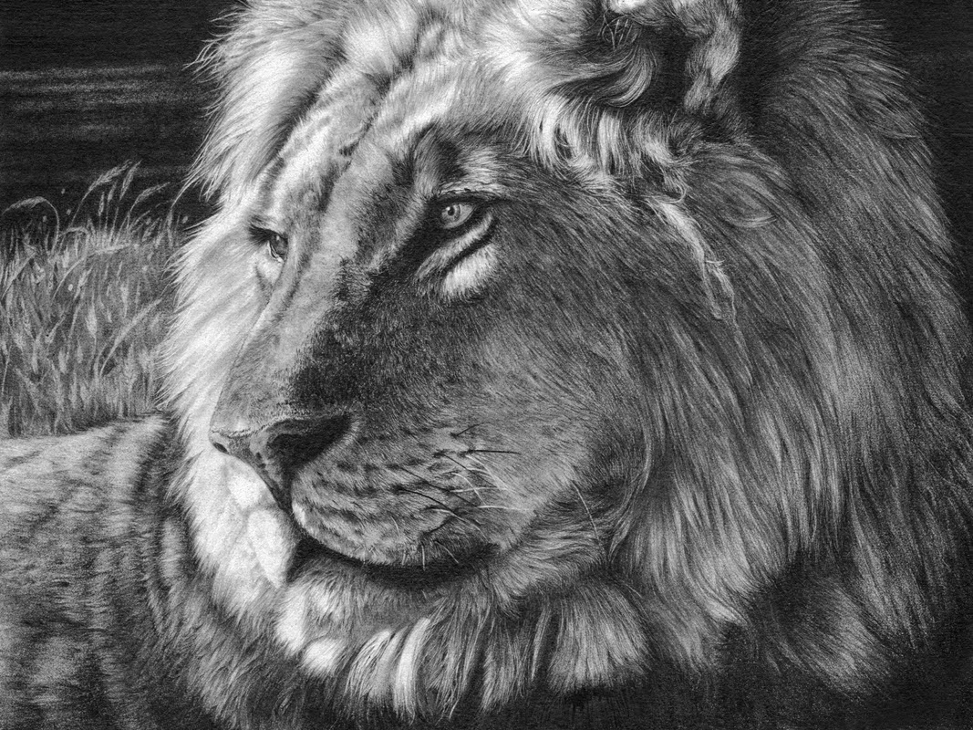 09-The-Dark-Side-Hyper-Realistic-Wildlife-Peter-Williams-www-designstack-co