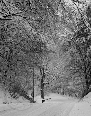 Heavy snow bows tree branches into a tunnel over a rural roadway.