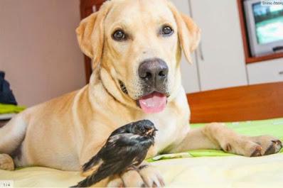 pas i ptica
