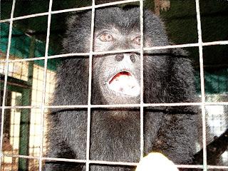 Um Macaco Pedindo Comida no Zoo de Luján